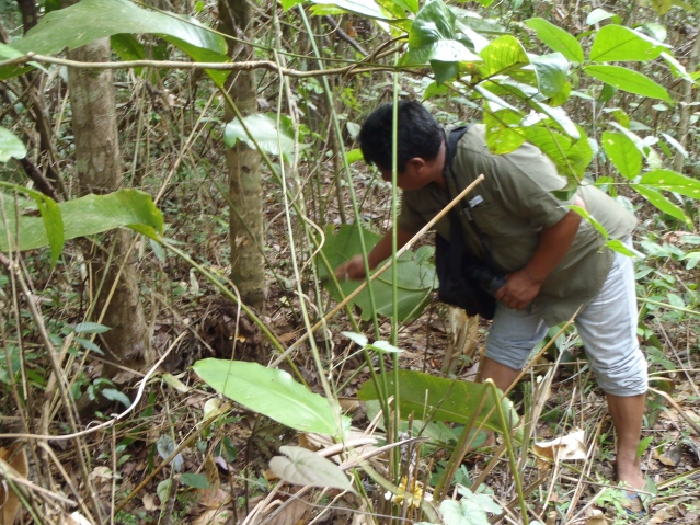 Guy, our guide, talking about the medicinal uses of local plants. Guy is also the Toshao, or village leader.